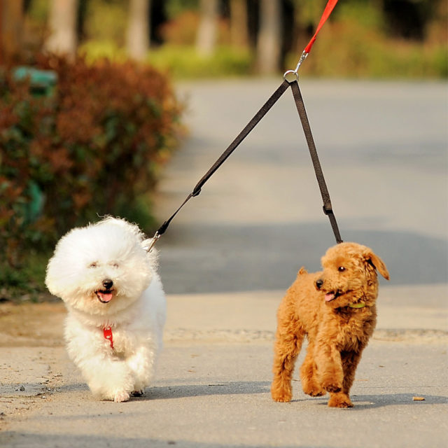 Double Twin Walking Leash