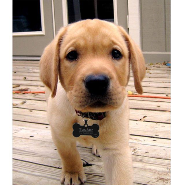 Anti-lost Dog ID Tag