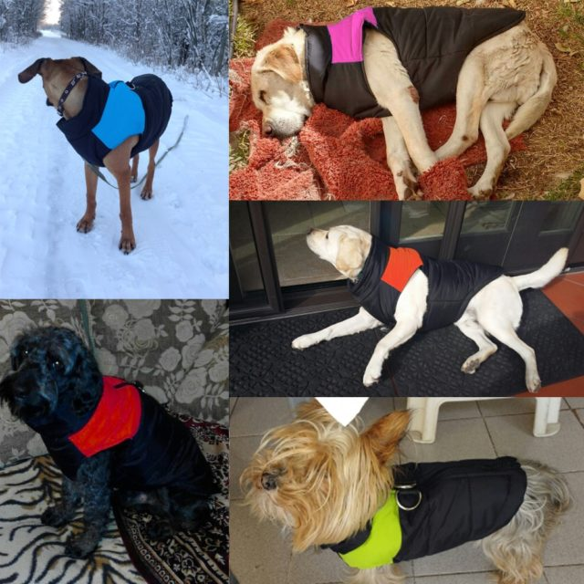 Fashion Waterproof Winter Dog's Vest